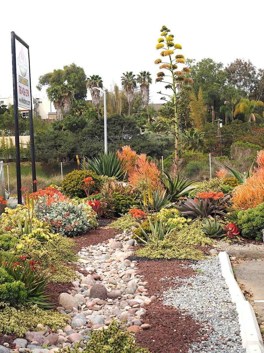 A Colorful Succulent Garden To Copy Weidners Gardens